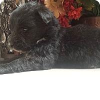 Adopt A Pet :: Koby - Davis, CA