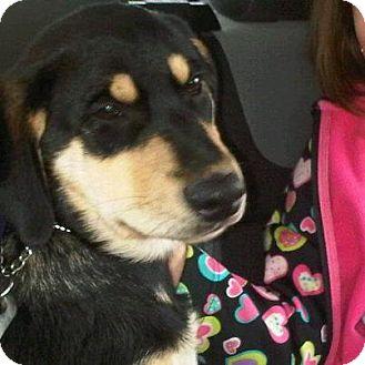 Rottweiler/Australian Shepherd Mix Puppy for adoption in Surrey, British Columbia - Luke