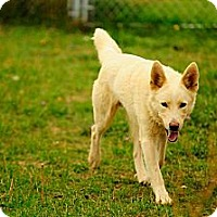 Adopt A Pet :: Riley - Chewelah, WA