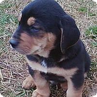 Adopt A Pet :: Mack - South Jersey, NJ