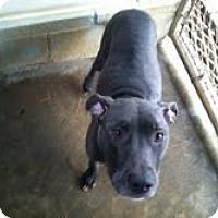 Adopt A Pet :: Twyla - Athens, GA