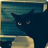 Adopt A Pet :: Angelina & Maddox - Deerfield Beach, FL