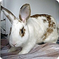 Adopt A Pet :: Bandit - North Gower, ON