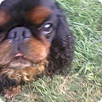 Adopt A Pet :: Gus - Cumberland, MD