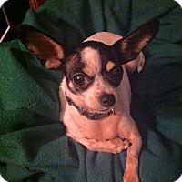 Adopt A Pet :: Hetty - Poulsob, WA