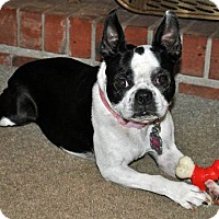 Adopt A Pet :: TIPPY - North Augusta, SC