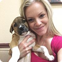 Adopt A Pet :: Aries - Las Vegas, NV