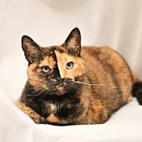 Adopt A Pet :: Ariel - Cary, NC