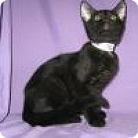 Adopt A Pet :: Abu - Powell, OH