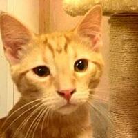 Adopt A Pet :: AA-Quinten - Tyler, TX