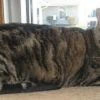 Adopt A Pet :: Tiana - Powell, OH