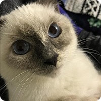 Adopt A Pet :: Rialta - Sherwood, OR