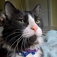 Adopt A Pet :: Riley - LaGrange, KY