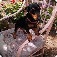 Adopt A Pet :: weenie - Sacramento, CA