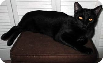 Domestic Shorthair Cat for adoption in Jacksonville, Florida - Mouth