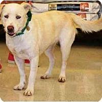 Adopt A Pet :: Poppy - Gilbert, AZ