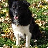 Adopt A Pet :: Hunter - Glenrock, WY