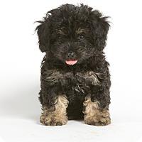 Adopt A Pet :: Holly - Nuevo, CA
