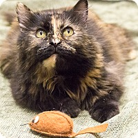 Adopt A Pet :: Torrie - Chicago, IL