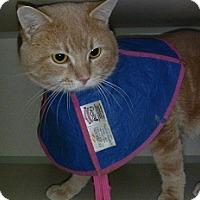Adopt A Pet :: Norman - Hamburg, NY