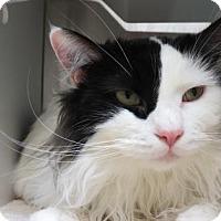Adopt A Pet :: Hendrix - Bellevue, WA