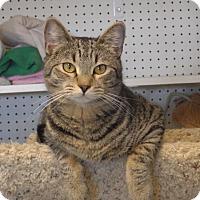Adopt A Pet :: Degas - Quail Valley, CA