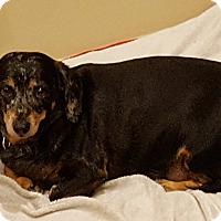 Adopt A Pet :: Sooky - Tucson, AZ