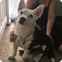 Adopt A Pet :: Dana - Thousand Oaks, CA