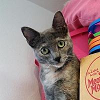 Adopt A Pet :: Reina - Palo Cedro, CA