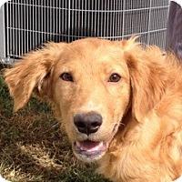 Adopt A Pet :: PJ - New Canaan, CT