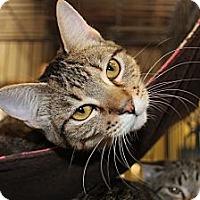 Adopt A Pet :: Aspyn - Santa Monica, CA