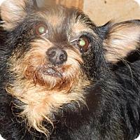 Adopt A Pet :: SYDNEE - Anderson, SC