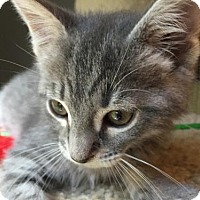 Adopt A Pet :: Albert - Flint HIll, VA