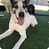 Adopt A Pet :: Kosmo - Dallas, TX