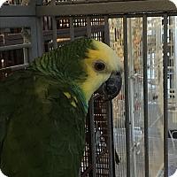 Adopt A Pet :: Thunder - Punta Gorda, FL