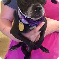Adopt A Pet :: Jelly - Oak Ridge, NJ