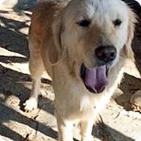 Adopt A Pet :: T4 Adora - BIRMINGHAM, AL