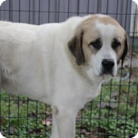 Adopt A Pet :: Angus-COURTESY POST - Garfield Heights, OH