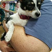 Adopt A Pet :: Alexis - Alhambra, CA