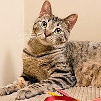Adopt A Pet :: Alister - Chicago, IL