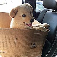 Adopt A Pet :: P17 Dash - BIRMINGHAM, AL