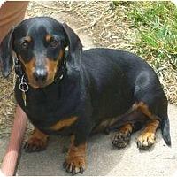Adopt A Pet :: Ava-Adoption Pending - San Jose, CA