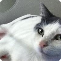 Adopt A Pet :: Cosmo - Hamilton, ON
