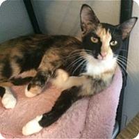 Adopt A Pet :: Ninja - Colorado Springs, CO
