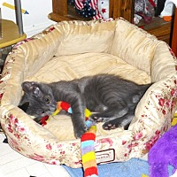 Adopt A Pet :: Martini - Speonk, NY