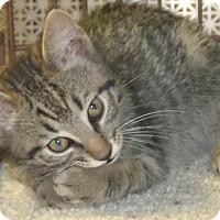 Adopt A Pet :: NECCO - Acme, PA