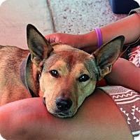 Adopt A Pet :: Racer - Oakley, CA