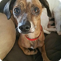 Adopt A Pet :: Blaze - San Marcos, CA