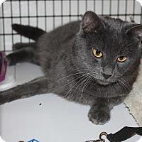 Adopt A Pet :: Salem - Jurupa Valley, CA