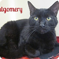 Adopt A Pet :: Montgomery - Menomonie, WI